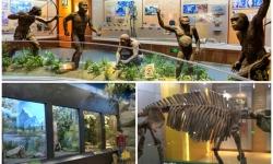 Tham quan Bảo tàng Lịch sử Tự nhiên ở Bắc Kinh, Trung Quốc